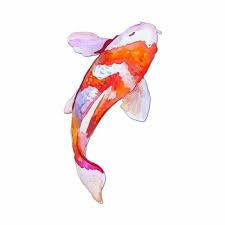 amazon_japanese-koi-fish