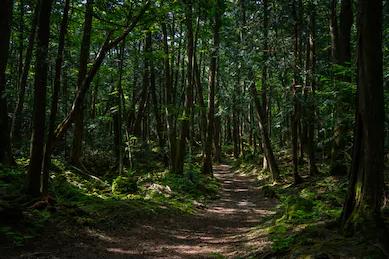 sea_of_trees_shuttershock