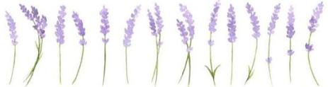 lavenderfield_healthfulmind